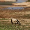 Drought Puts Brazil's Largest City On The Brink