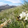 Bumble Bees Changing In Response To Decreased Flower Diversity, Research Shows