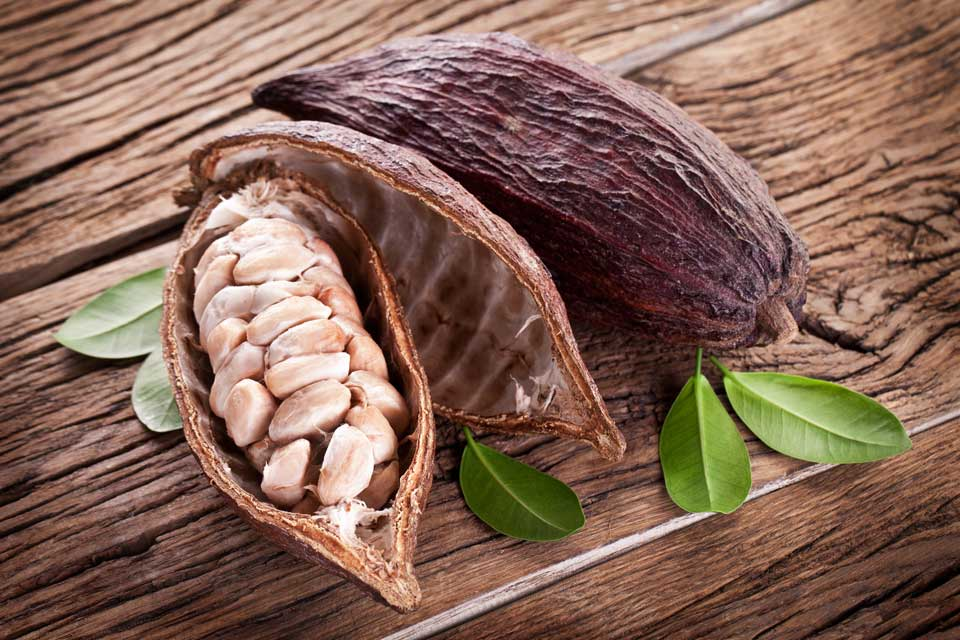 cocoa beans Cocoa beans from latin america are particularly affected it was claimed that  regular consumption of dark chocolate with a high cocoa content.